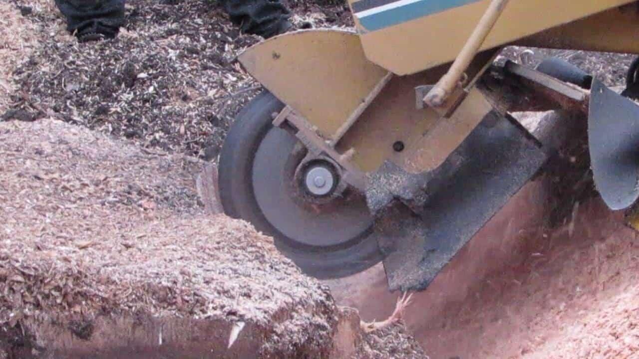 Landmark Tree Care Stump Grinding