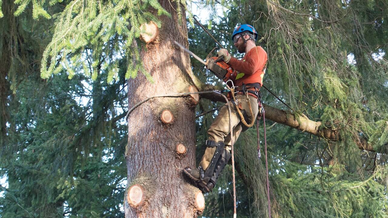Landmark Tree Care Pruning & Trimming