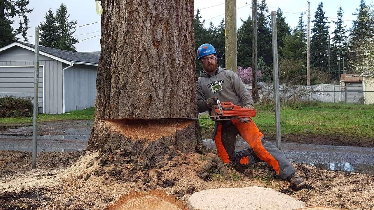 Landmark Tree Care Tree Removal